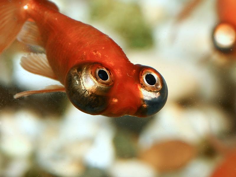 Зрение у рыб оказалось дорогим удовольствием. 13380.jpeg