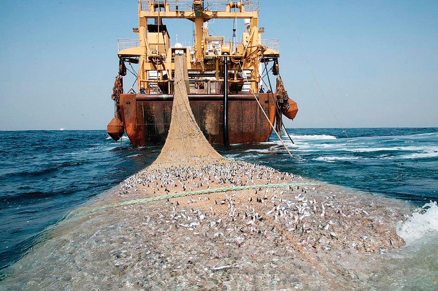 Рыбаки торопятся уничтожить всю рыбу в районах будущих заповедников. 13381.jpeg