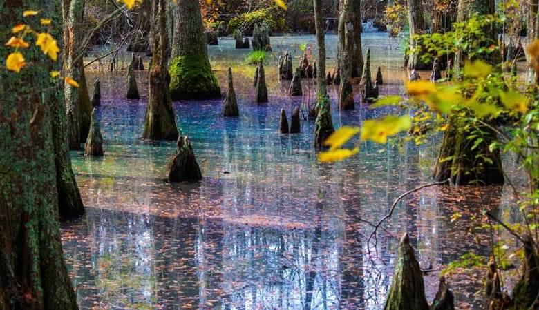 Странное болото нашли в Виргинии. 14383.jpeg