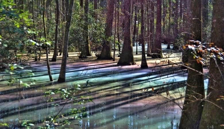Странное болото нашли в Виргинии. 14385.jpeg