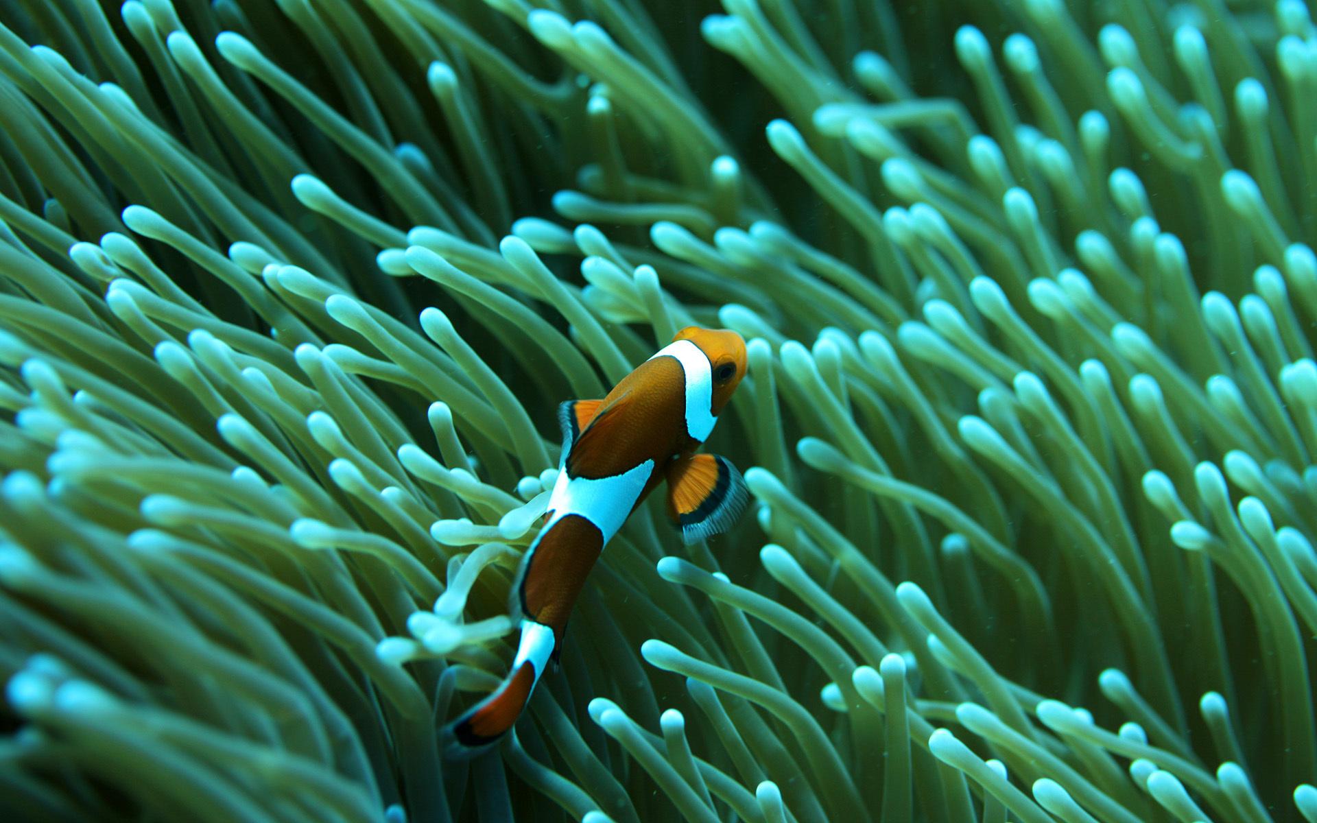 Подводные капризы природы. 13393.jpeg