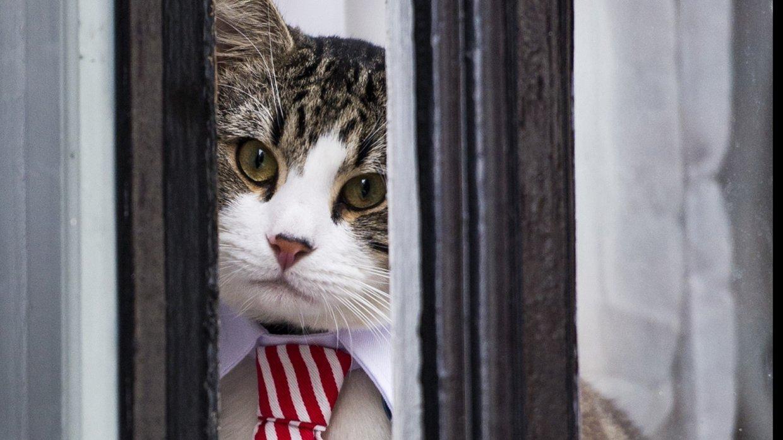 В посольстве Эквадора рассказали, что стало с котом Ассанжа. кот