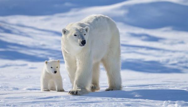 Раскрыты новые подробности скорой климатической катастрофы. экология, климат, глобальное потепление