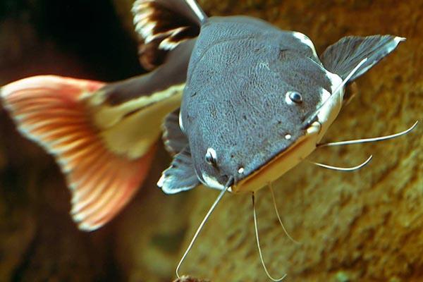 Запретные рыбы. 14425.jpeg