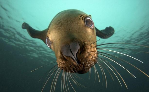 В Приморье построят комплекс реабилитации морских животных. реабилитация