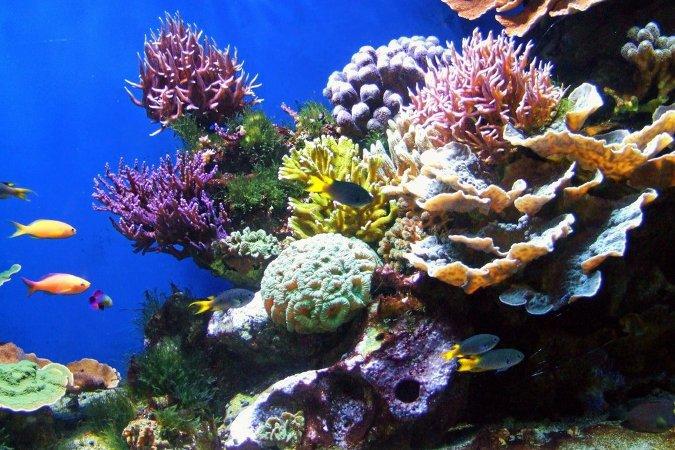 В ОАЭ строят искусственный риф. рифы