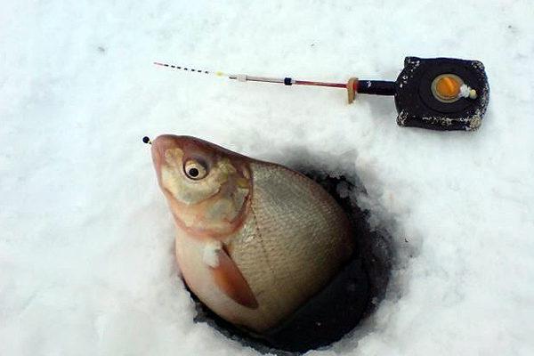 Зимняя рыбалка на необычную приманку. 14437.jpeg