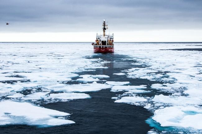 Специалисты по морским животным: на полюсе есть рыба. арктика
