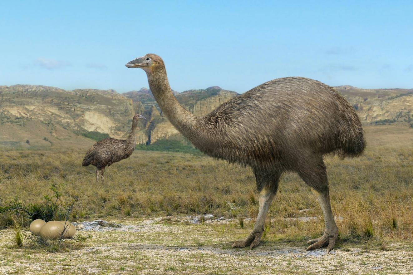 Самую большую птицу ученые назвали Vorombe titan. 13443.jpeg