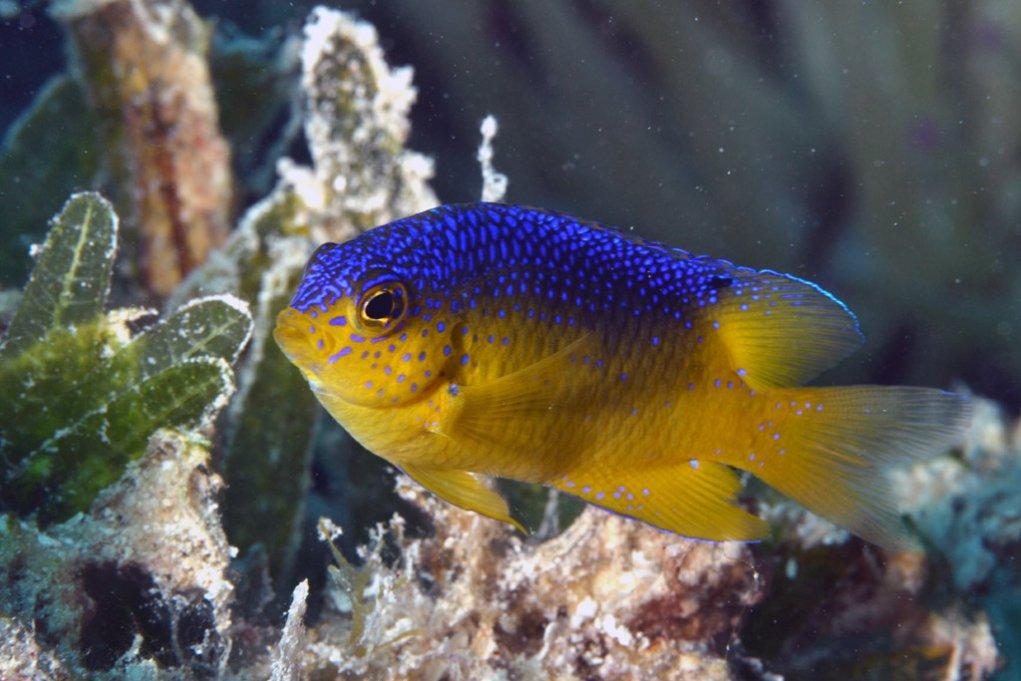 Ученые: рыбы так любят своих детей, что готовы их съесть. рыбка