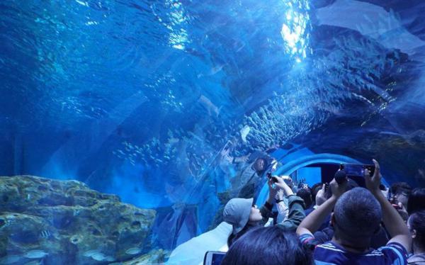 В Китае открылся самый высотный в мире океанариум. океанариум, морские обитатели, Китай