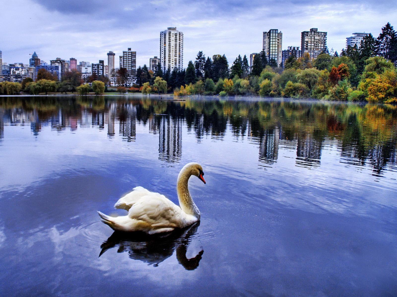 Самара: обыкновенная история обыкновенного озера. самара