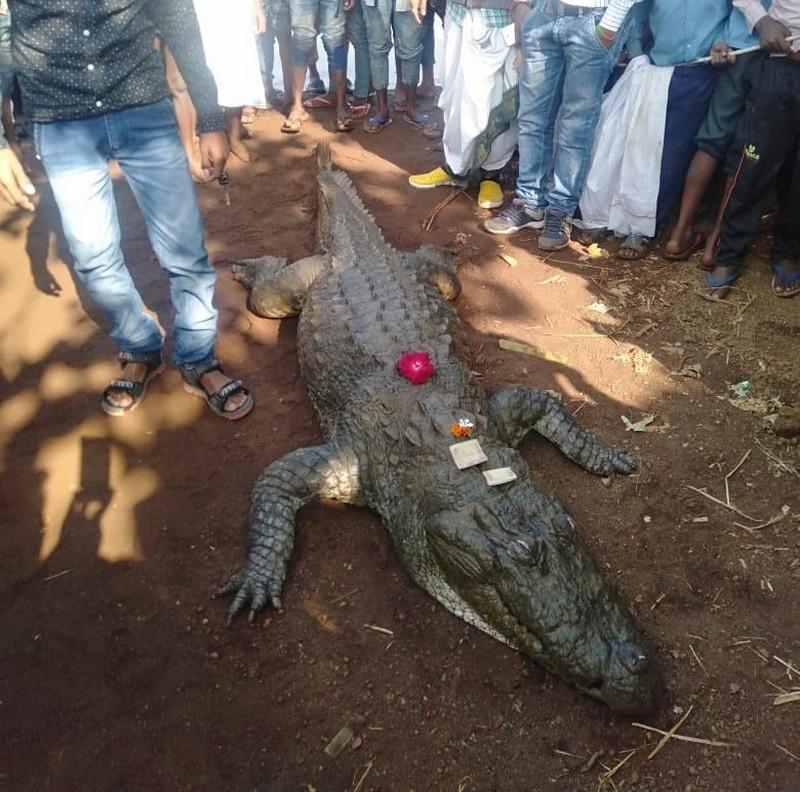 В деревне Бавамохатра похоронили крокодила. 14450.jpeg