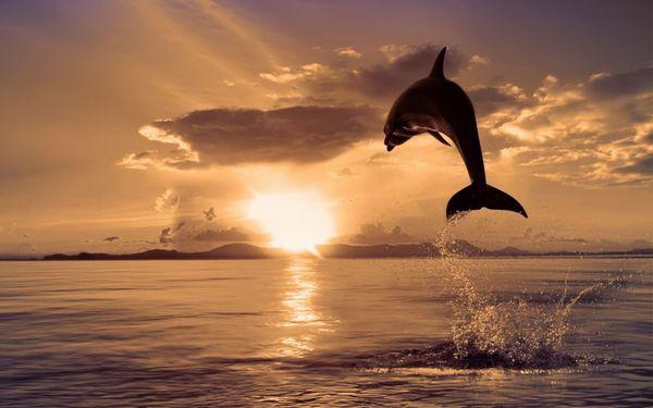 Ученые: дельфины умеют разговаривать. дельфин