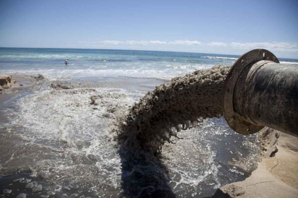 Вред рыбе от строительной пыли оценит компьютер. экология, рыба, строительная пыль, компьютер