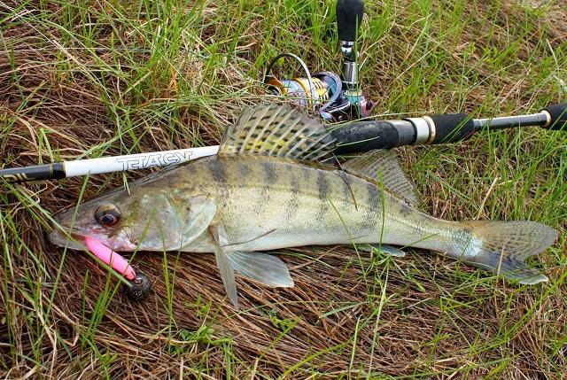 Активный поиск рыбы на реке В ДЗЕНЕ. 13459.jpeg