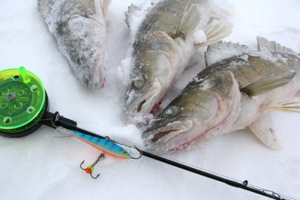 Что предложить рыбе вместо живца?. 14459.jpeg