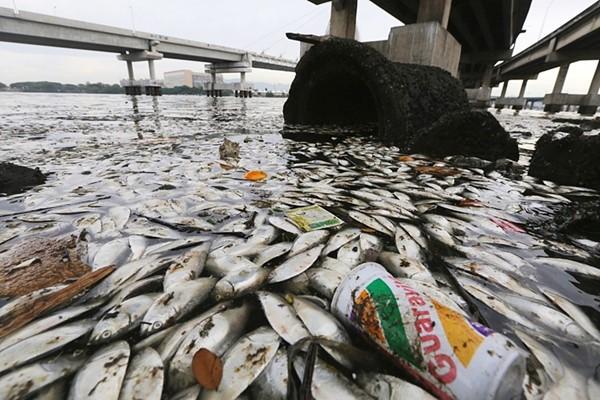 В реке Урал погибло 63 тонны рыбы. 14471.jpeg