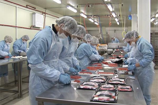 В Магадане откроют рыбоперерабатывающий комплекс. 14473.jpeg