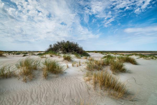 На осушенном дне Аральского моря будет расти саксаул. экология, море, Аральское море, саксаул