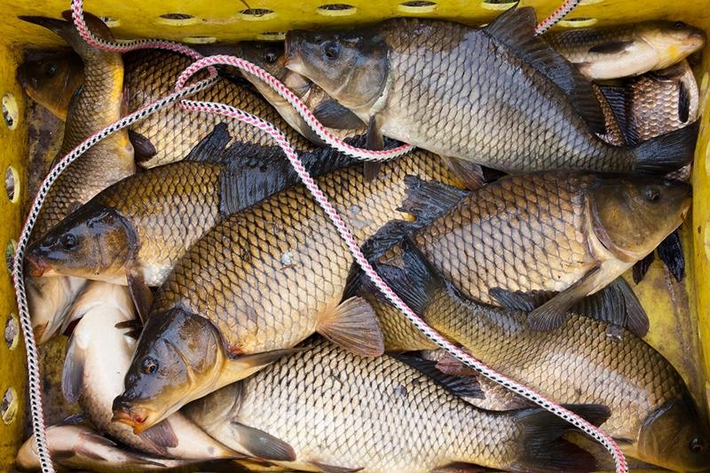 Карпfishing по-российски. 13486.jpeg