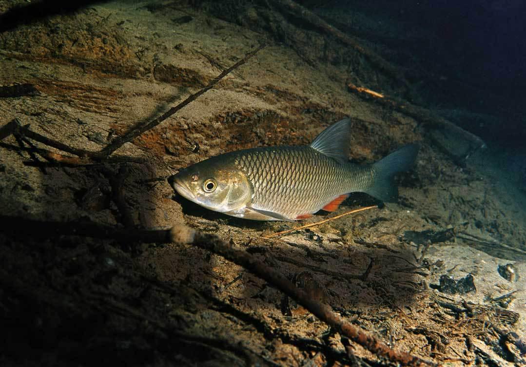 Самая красивая рыба. 13489.jpeg