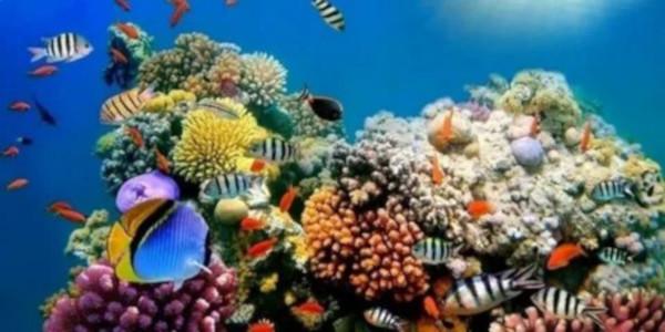 Ученые Флориды заставили кораллы размножаться ваквариуме. ученые, кораллы, аквариум, Флорида
