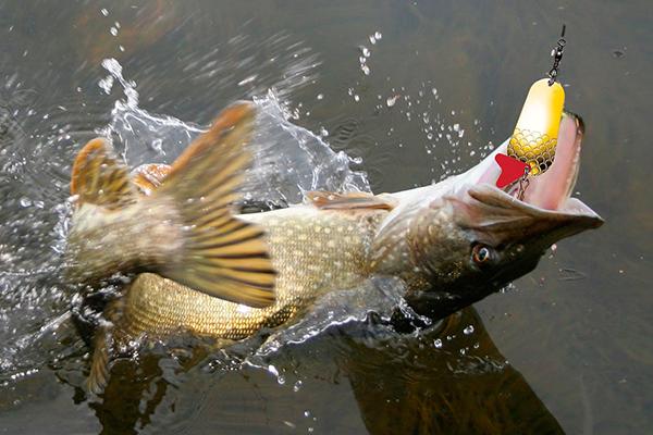 Ловля рыбы самодуром. 15490.jpeg