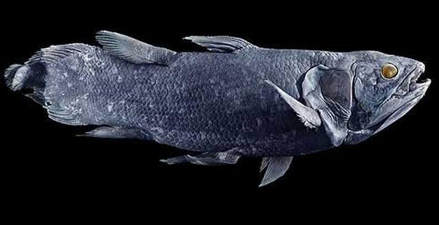 Удивительные находки рыбаков. 14494.jpeg