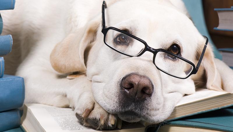 Собаки не умнее других животных. 13495.jpeg