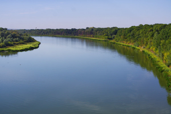 В низовьях Дона стало меньше молоди промысловых рыб. ученые, исследование, рыба, река, Дон