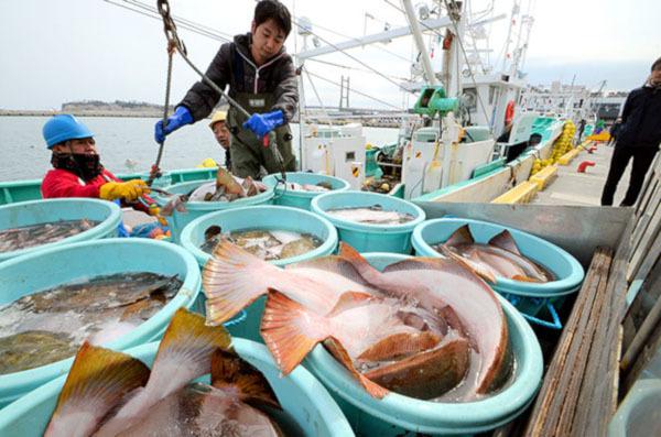 Рыба вновь попала в торговые «сражения» США и Китая. рыба, пошлина, США, Китай