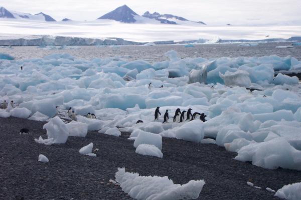 После таяния ледников в Арктике обнаружили новые острова. ледники, острова, Арктика