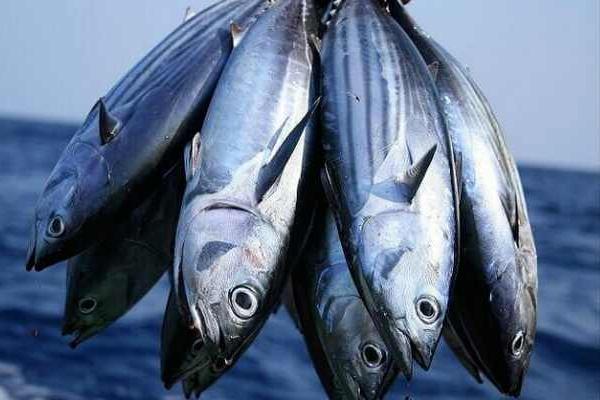 Поймайте свою «большую рыбу». 13502.jpeg