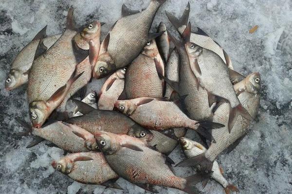 Шевелись, плотва - ищем рыбку зимой. 14503.jpeg