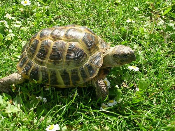 В заповедной зоне Казахстана на волю выпустили одновременно более четырех тысяч черепах. черепахи, заповедник, Казахстан