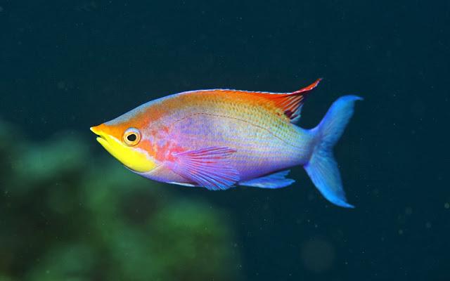 Ученые вывели сияющих рыбок. 13520.jpeg