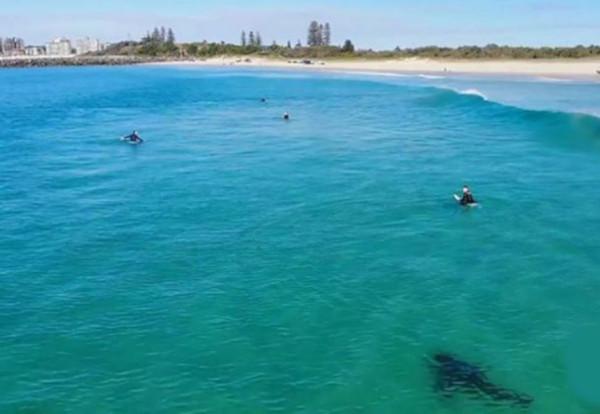Дрон снял пугающее видео с акулами, плавающими вокруг серферов. акула, серферы, Калифорния