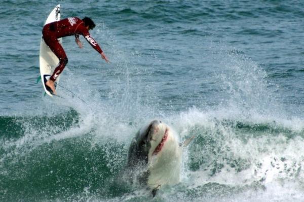 Во Флориде акула напала на серфингиста. животные, акула, серфингист, Флорида