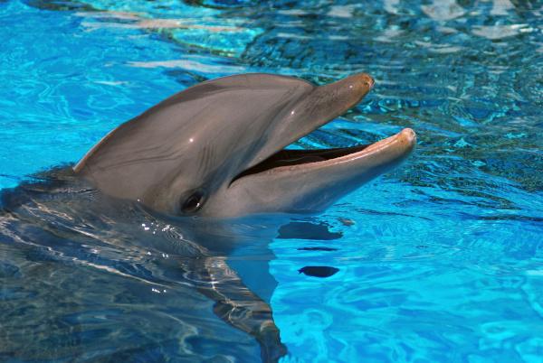 В Новой Зеландии туристам запретили плавать с дельфинами: Слишком залюбили животных. животные, дельфины, Новая Зеландия