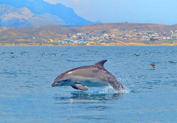 Дельфины полюбили Крымский мост. дельфины, Крымский мост, Крым