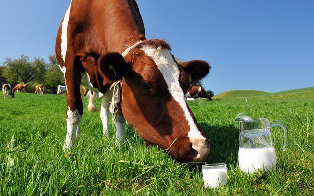 Ученые усомнились в пользе молока. 13531.jpeg