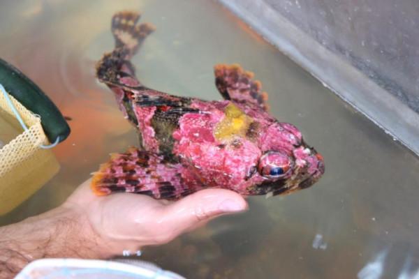Научный «улов»: в Приморский океанариум переданы редкие виды животных. океан, морские обитатели, рыбы, экспедиция, океанариум, Приморье
