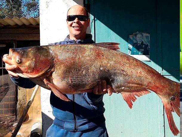 Ставрополец поймал метрового толстолобика. 13549.jpeg