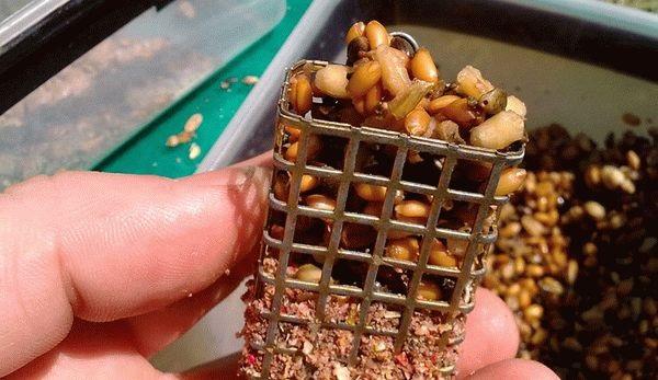 Подготовка пшеницы для рыбалки. Различные способы. 15553.jpeg