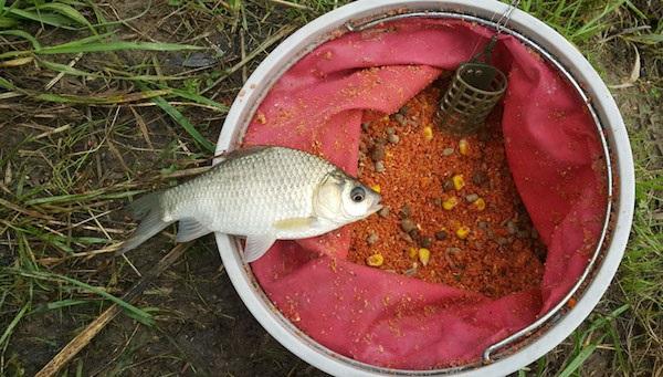 Одни из самых эффективных прикормок для рыб. 15561.jpeg
