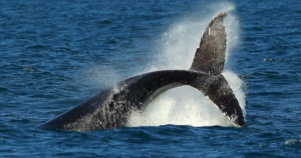 У побережья Хоккайдо нашли новый вид китов. биология, морские животные, киты, Хоккайдо, Япония