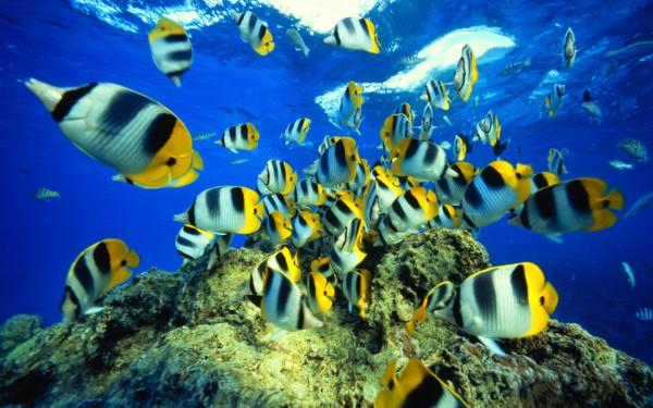 Российские врачи и океанологи будут изучать рыб для борьбы с онкологическими заболеваниями. рыбы, ученые, исследование, Тихий океан