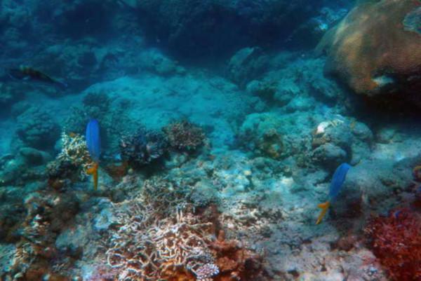 Подводные вулканы обнаружили в Коралловом море. океан, подводные вулканы, Коралловое море