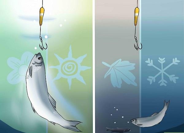 Правильное время для рыбной ловли. 15568.jpeg